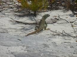 iguana island 15th anniversary vacation