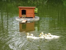 17 best ideas about duck house on pinterest duck duck ornamental