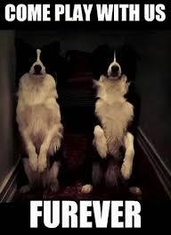 Border Collie Meme - r礬sultat d images pour border collie meme cutesy pinterest