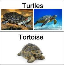 reptiles what is the difference between a tortoise and a turtle
