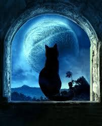 manip cat and moon by thuhong02 on deviantart