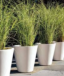 easy container gardens driveways walkways and grasses