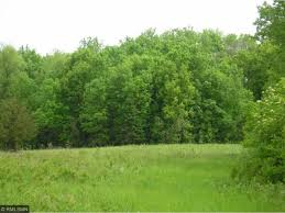 Minnesota forest images Minnesota forest land for sale jpg