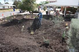 landscaping with native plants convert your grass to a rain garden with rebate programs