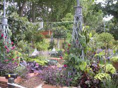 pond edge plant carex secta x 10 orari nursery online midgley