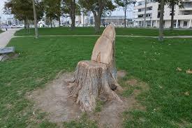 siege en forme de file tronc d arbre découpé en forme de siège 1 jpg wikimedia commons