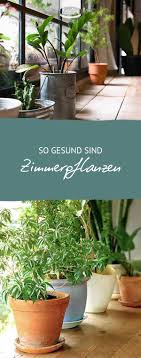 grünpflanzen im schlafzimmer 375 besten zimmerpflanzen bilder auf blumen