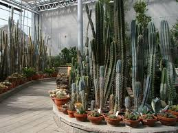 56 best cactus garden ideas images on pinterest cacti garden
