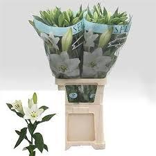 Lily Vases Wholesale Uk Buy Lily Longi Wholesale Flowers Online Wedding Flowers