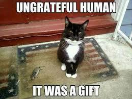 Talking Cat Meme - i m always the ungrateful human funny animals pinterest