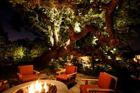 best techniques to shine light into a large tree forum lighting