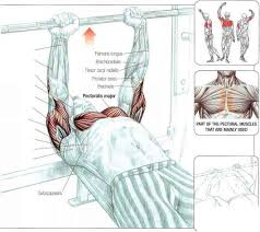 Muscles Used When Bench Pressing Incline Presses Abdominal Muscles Fitness Vip