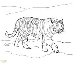 tiger outline drawing aggressive tiger head close up hand drawing