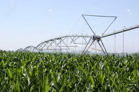 irrigated corn irrigated corn stock photo picture and royalty free image image