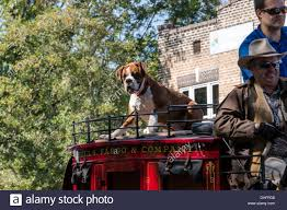 Dog On A Roof Boxer Dog On Roof Of Wells Fargo U0026 Company Carriage Participating