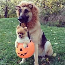 doggies having fun in halloween