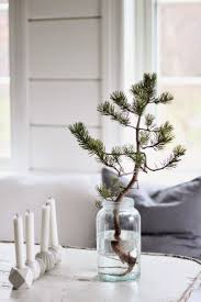 best 25 live christmas trees ideas on pinterest natural