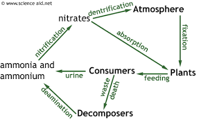 nutrient cycles recycling in ecosystems the carbon and nitrogen