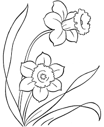 126 flowers drawing daffodil images