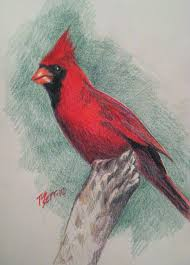 red feather art sketches