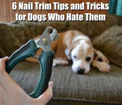 6 nail trim tips and tricks for dogs who them live the pet life