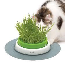 amazon com catit senses 2 0 grass planter pet supplies