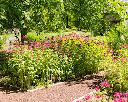 native plant garden design picture on great home decor inspiration