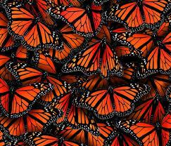 monarch butterflies fabric by elmira amirova on spoonflower