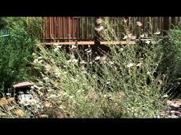 Botanical Gardens El Paso How To Use Evergreens In Your Garden El Paso Botanical Garden
