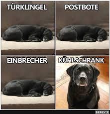 lustige hundesprüche die besten 25 lustige hunde ideen auf lustige welpen