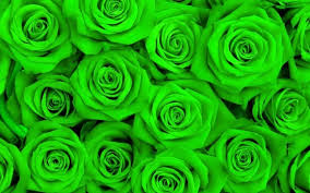 green roses papel parede mural wallpaper green 3d wallpaper eurpean