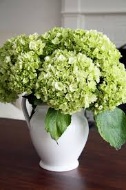 floral arrangement of green hydrangea in white pitcher fabulous