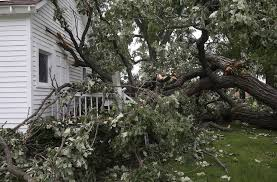damage from fallen tree in wauconda won t delay cook house event