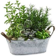 Indoor Herb Planters by 130 Best Herbs And Herb Gardens Images On Pinterest Healing