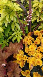 cool colorful container gardens for chilly weather u2014 swansons
