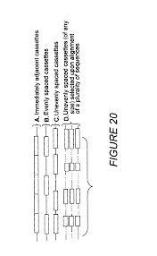 patent us6713279 non stochastic generation of genetic vaccines