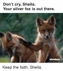Meme Fox - don t cry sheila your silver fox is out there shoebox keep the