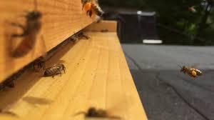 home muskoka bees community
