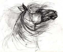 wild horse drawings fine art america