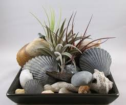 how to care for air plants better living magazine