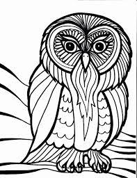 32 free owls color owl worksheets schoolfy images