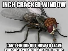 Fly Out Memes - scumbag fly meme weknowmemes