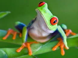 eyed tree frog jigsaw puzzle coolmath com