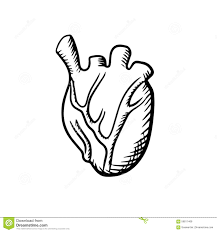 human heart in sketch style stock vector image 59811468