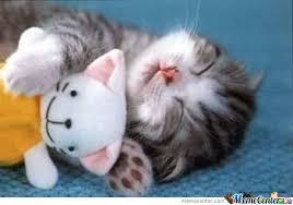 Sleeping Cat Meme - cute sleeping kitty by cookieman meme center