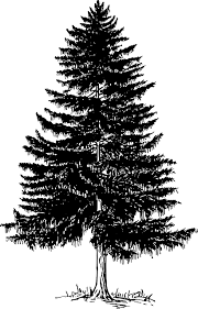 free vector graphic biology botany plant tree free image on