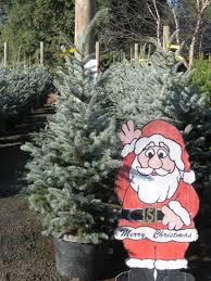 christmas tree care christmas ideas