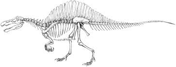 spinosaurus skeleton by menitti on deviantart