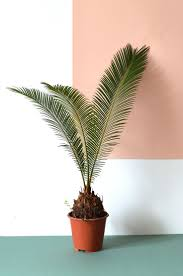 indoor plants that need little light best 25 plants ideas on pinterest plants indoor plant and