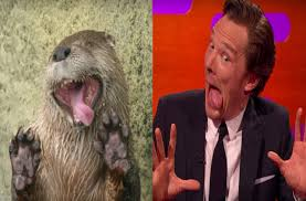 Cumberbatch Otter Meme - benedict cumberbatch s otter impersonations are on point gay times